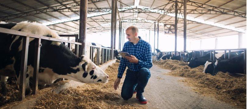 Estudo quer perceber linguagem corporal dos animais de produção