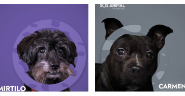 SOS Animal anuncia número recorde de apadrinhamentos
