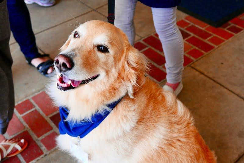 Vet Atual intervenções assistidas por animais cao de terapia