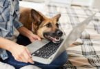 Animais de companhia ajudam a superar confinamento