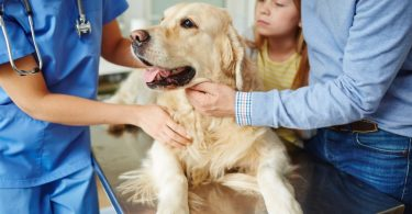Cao no veterinário com familia vet atual