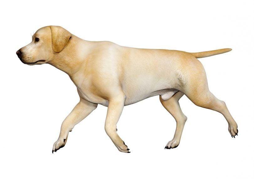 Já é possível digitalizar cães usando apenas uma câmara – e a tecnologia pode ser usada na veterinária