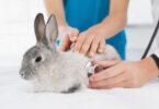 Novo estudo realiza análise ante-mortem e post-mortem de coelhos com RHDV2