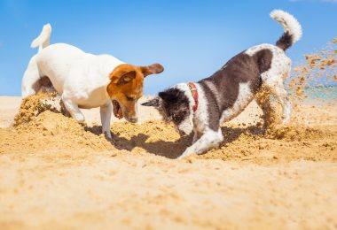 Torres Vedras também já tem praia para cães