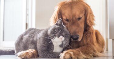 """Feromonas são """"chave"""" para relações harmoniosas entre pets"""