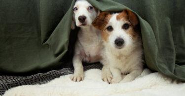 Estilo de vida ativo reduz o medo nos cães