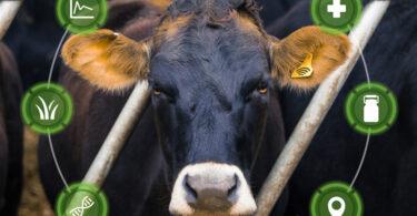 Reconhecimento facial para animais adaptado à produção animal