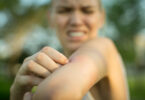 Atividades humanas podem promover propagação de mosquitos disseminadores de doenças