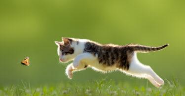 Estudo: existem cinco tipos de tutores de gatos, dos mais conscienciosos aos defensores da liberdade