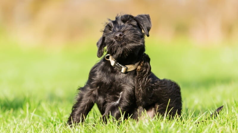 cao coçar parasitas veterinarios acreditam alteracoes sazonalidade impacto negativo