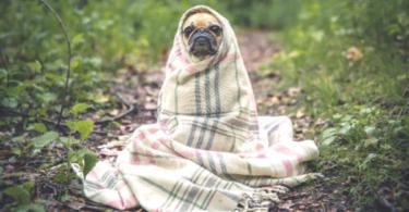 Cão frio inverno