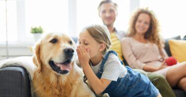 Falar com o cão