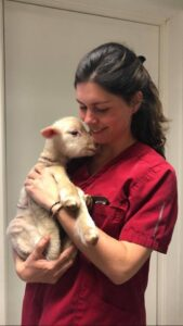 veterinários
