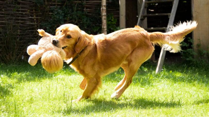 Edgard & Cooper lembra importância do exercício físico para cães