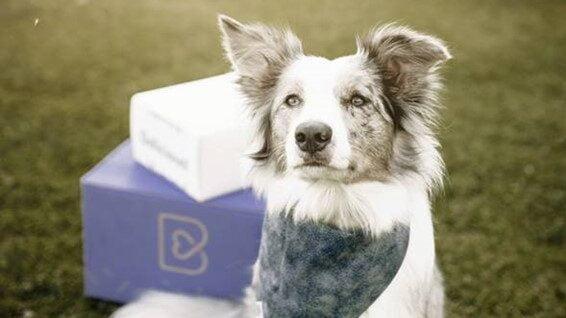 Barkyn atribuiu subsídio de alimentação e creche paga aos cães