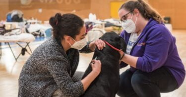 Animalife recebe donativo de 30 mil euros para vacinar cães e gatos