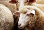 Otimização da produção animal é o tema do novo ciclo de 'webinars' da Wezoot