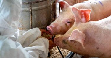 Alimentação animal em discussão promovida pela IACA
