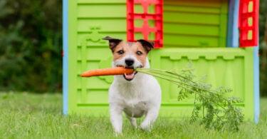 OCV defende que bem-estar animal deve ser incluído na profissão veterinária