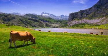 """""""Otimizar a produção de bovinos"""" é o tema do novo webinar da Wezoot"""