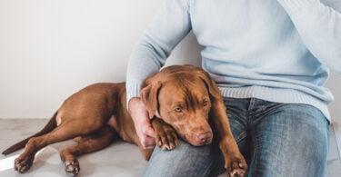 Coronavírus entérico canino é possível causa de surto de vómitos em cães