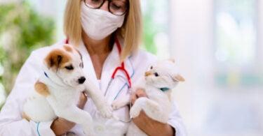 Servet edita segunda edição de livro de gestão dos centros clínicos veterinários