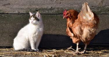 Mais de 4 mil milhões de animais declarados em Portugal