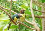 O Zoomarine informa que vai receber três habitantes: um casal de Aracaris-limão (Pteroglossus viridis) e um Tatu-bola (Tolypeutes matacus).