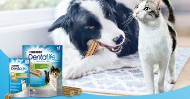 Saúde oral dos animais de companhia é o tema do desafio Purina DentaLife
