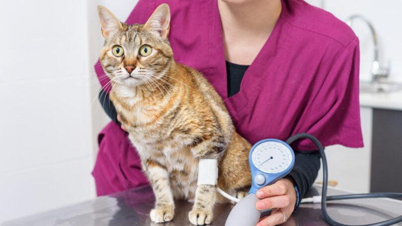 De forma a assinalar o mês da hipertensão felina, que acontece em maio, a farmacêutica Ceva lançou uma campanha de consciencialização.