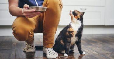 """Além de ser parte do """"bilhete de identidade"""" dos animais de companhia, o microbioma pode ser influenciado por fatores externos."""