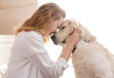 Um estudo, que envolveu 1681 cães e os seus tutores, revelou que as personalidades dos cães tendem a ser semelhantes à dos seus tutores.