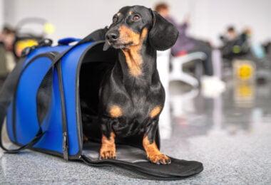 A Tails Travel é a primeira plataforma online totalmente pet friendly em Portugal e foi criada por Sara Bastos.