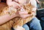 As adoções de gatos aumentaram 78% no ano passado, já as de cães aumentaram 15%, segundo dados do Sistema de Informação de Animais de Companhia.