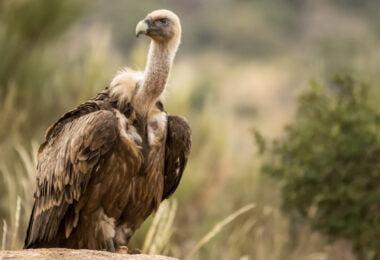 Centro de recuperação animal já devolveu 250 aves à natureza