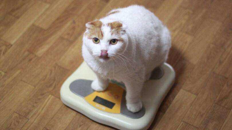 Estudo: Mau comportamento, obesidade e diarreia em cães e gatos cresceu