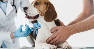 No âmbito do Dia Mundial da Vacinação Animal (20 de abril), a APIFVET lembra a importância da vacinação animal.