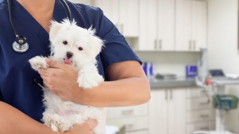 O Animal Wellness & Welfare Committee(AWWC) da World Small Animal Veterinary Association (WSAVA) criou uma carta de bem-estar animal.