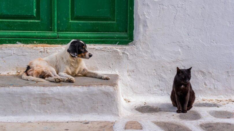 Um projeto de lei grego que prevê a esterilização de todos os animais de companhia está a gerar alguma oposição.