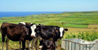 """O secretário da Agricultura e Desenvolvimento Rural dos Açores afirmou que a exportação de animais vivos na região """"não pode acabar nunca""""."""