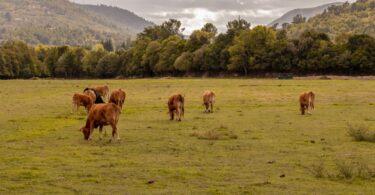 """Várias organizações ligadas à alimentação e ao mundo rural """"repudiam as inverdades sobre o agroalimentar e condenam a campanha de rumores""""."""