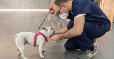 Na dúvida, testar é a melhor forma de diagnosticar precocemente a leishmaniose, uma doença complexa, que afeta muito mais cães do que gatos.