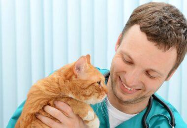 O HABRI e a WSAVA juntaram-se numa parceria que pretende destacar a importância da medicina veterinária nas ligações entre tutores e animais.