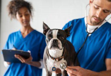 A VetCT está a oferecer aos recém-licenciados acesso à sua aplicação de forma gratuita durante os seus três primeiros meses na veterinária.