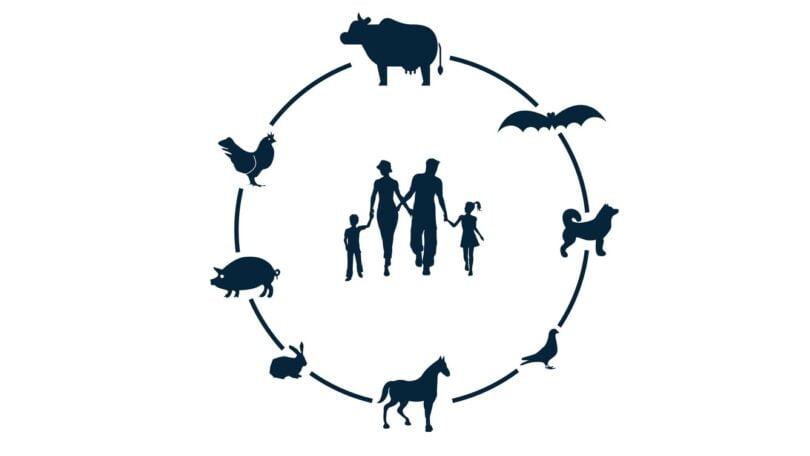 A APIFVET recorda as consequências das alterações climáticas e o consequente aumento da temperatura na saúde animal e humana.