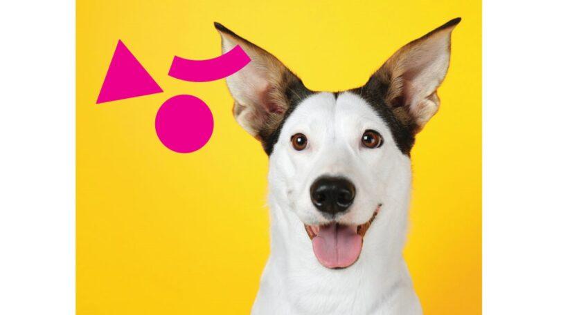O Alegro Setúbal tornou-se num centro comercial dog friendly, reforçando o posicionamento dos centros comerciais Alegro.