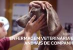 enfermeira veterinária a cuidar de cão - divulgação do Mestrado de enfermagem veterinária em animais de companhia