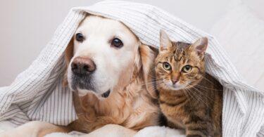 A Associação de Estudantes da Faculdade de Medicina Veterinária da ULHT criou o Núcleo de Medicina de Animais de Companhia (NMAC).