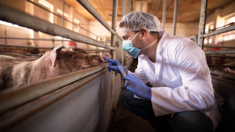 O novo relatório da EFSA, da EMA e do ECDC revela que o uso de antibióticos na produção animal diminuiu, sendo menor que em humanos.