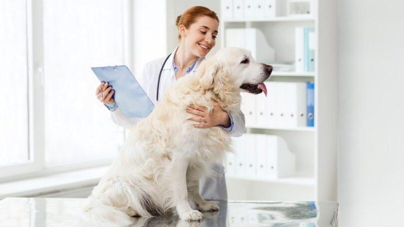 Num centro veterinário o cliente está disposto a pagar mais para ter um atendimento de excelência. Os tutores estão cada vez mais informados.